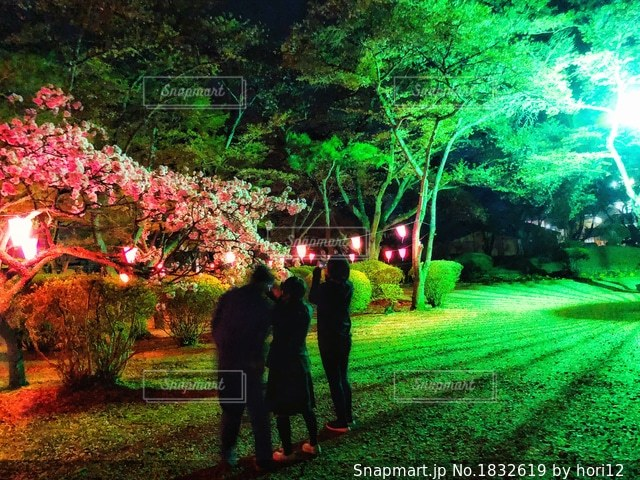 夜桜の写真・画像素材[1832619]