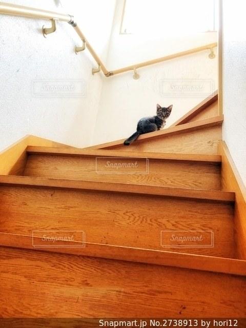 階段でたたずむ子猫の写真・画像素材[2738913]