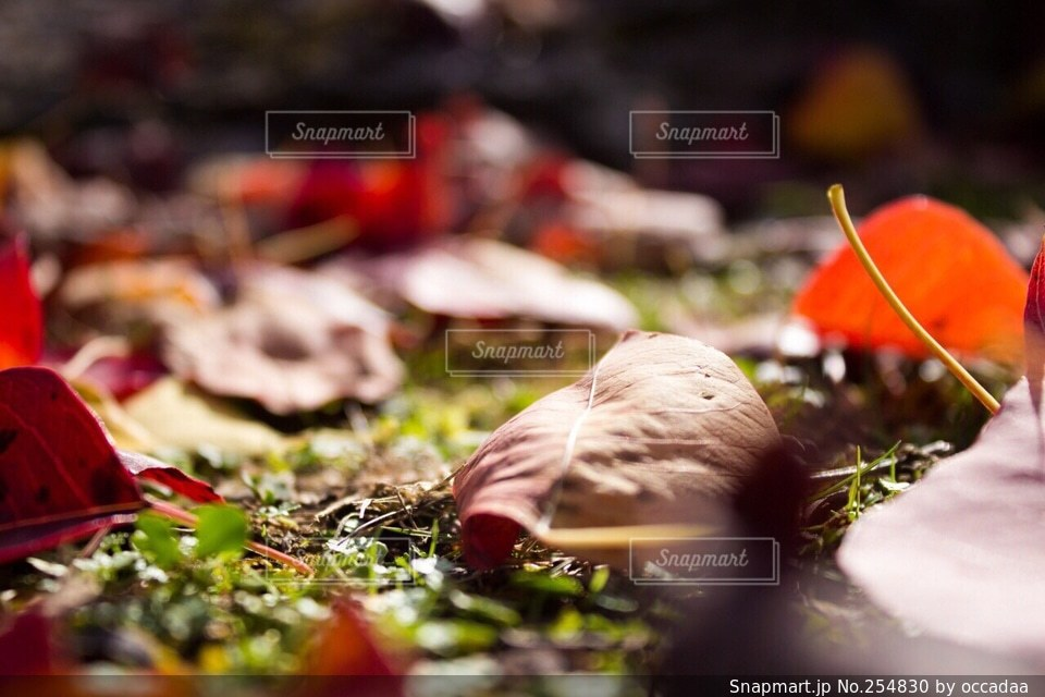 自然の写真・画像素材[254830]