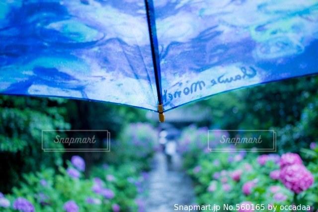 花の写真・画像素材[560165]
