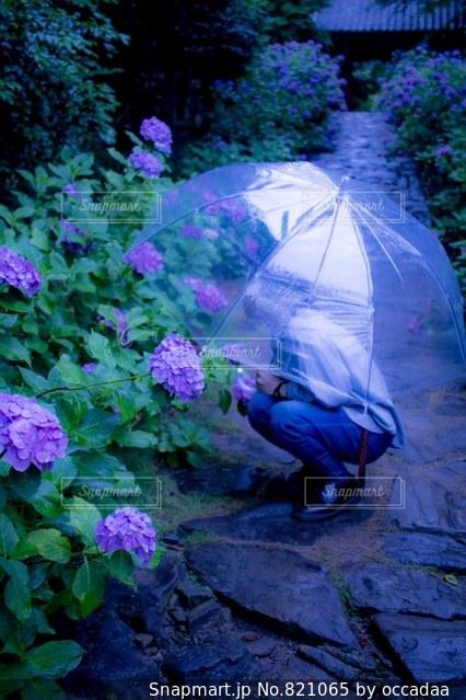 ピンクの傘と茂みのグループ - No.821065