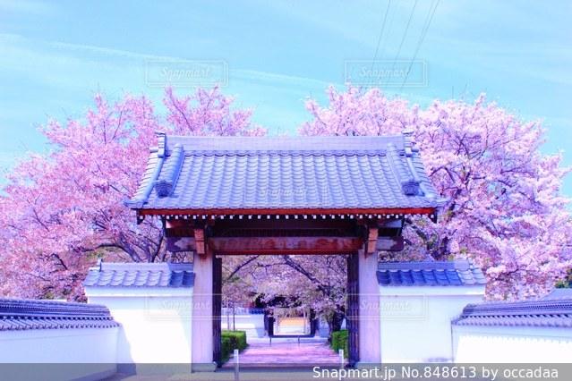 背景の木と家の写真・画像素材[848613]
