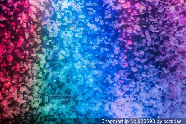 紫の花のグループの写真・画像素材[923593]