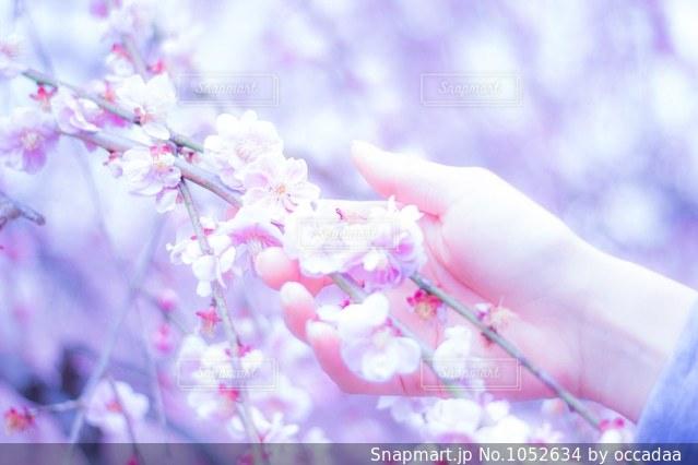 近くの花のアップの写真・画像素材[1052634]