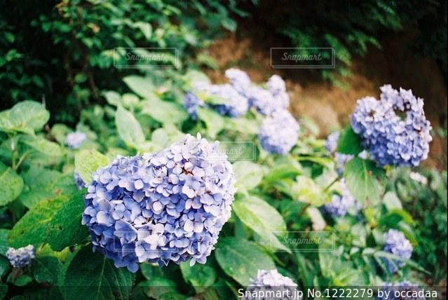近くのフラワー ガーデンの写真・画像素材[1222279]