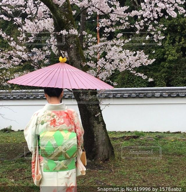 No.419996 桜