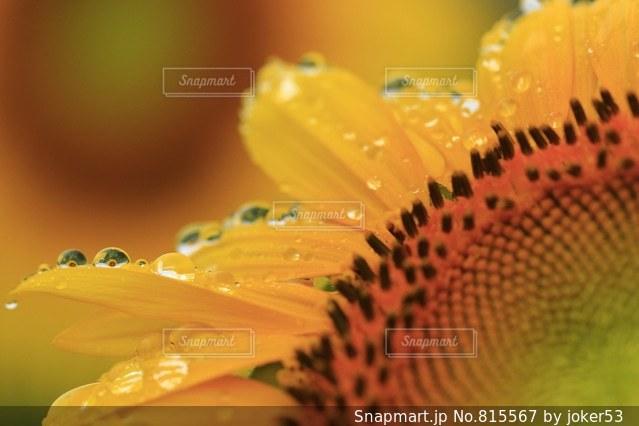 夏の通り雨の写真・画像素材[815567]
