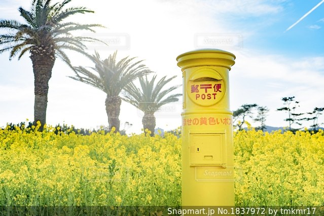 菜の花畑と幸せの黄色いポストの写真・画像素材[1837972]