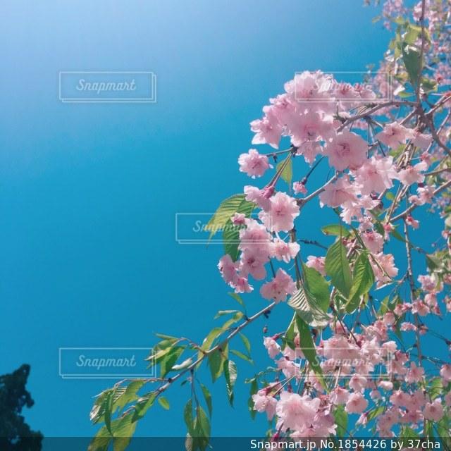 青と緑とピンクの写真・画像素材[1854426]