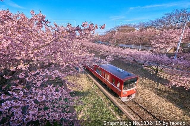 お花見列車の写真・画像素材[1832415]