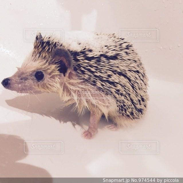 お風呂。の写真・画像素材[974544]