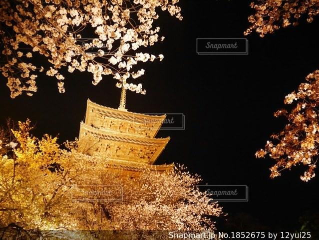 寺と夜桜の写真・画像素材[1852675]