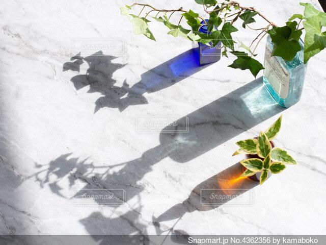 花瓶とグリーンの写真・画像素材[4362356]