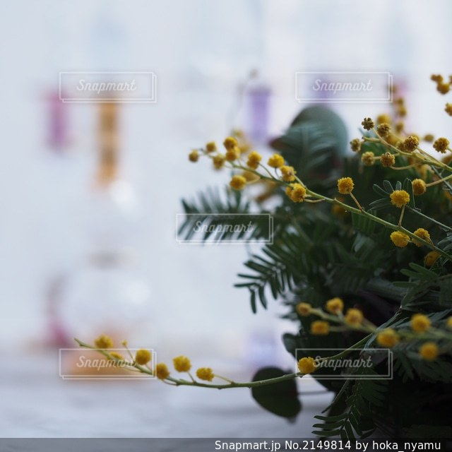 自然の写真・画像素材[2149814]