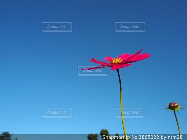 空にカラフルな凧の写真・画像素材[1865022]