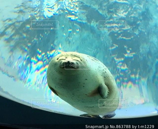 水を入れたボウルの写真・画像素材[863788]