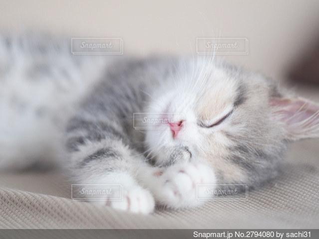 可愛い寝顔の写真・画像素材[2794080]
