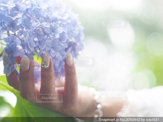 雨上がりの紫陽花との写真・画像素材[3050442]