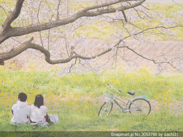 麗かな昼下がりの写真・画像素材[3053786]