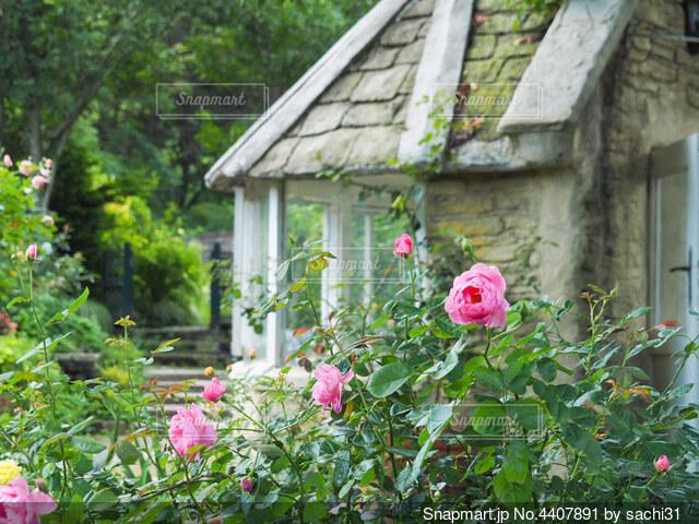 ピンクの花が庭にあるの写真・画像素材[4407891]