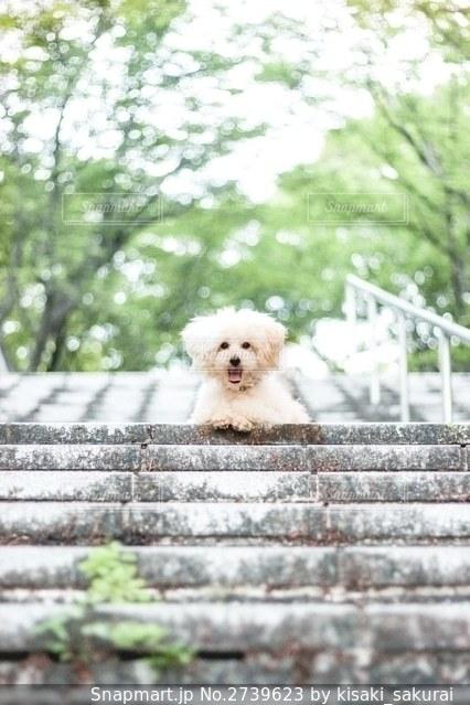 白いフェンスの上に座っている犬の写真・画像素材[2739623]