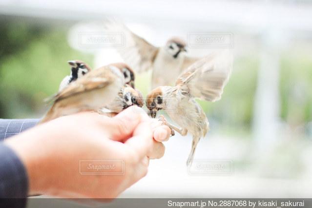 鳥に餌をやる人の手元の写真・画像素材[2887068]