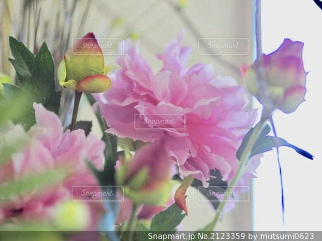 花のクローズアップの写真・画像素材[2123359]