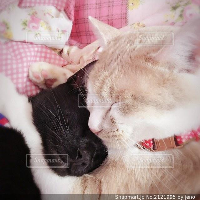 ぎゅっと抱きしめる猫の写真・画像素材[2121995]