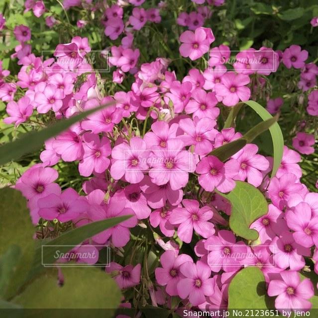 花のクローズアップの写真・画像素材[2123651]