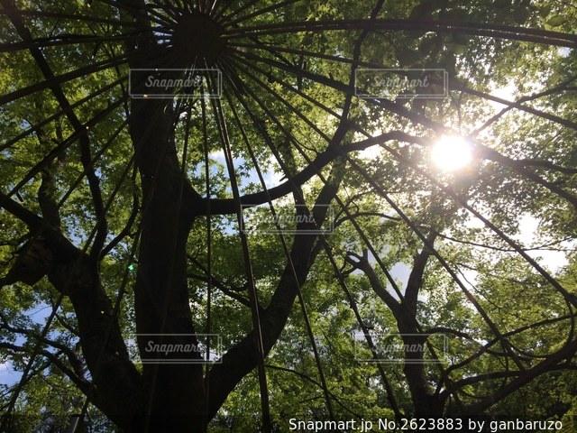 木々の隙間から太陽の光が降り注ぐの写真・画像素材[2623883]