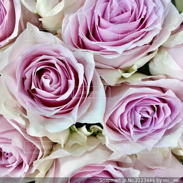 花のクローズアップの写真・画像素材[2123444]