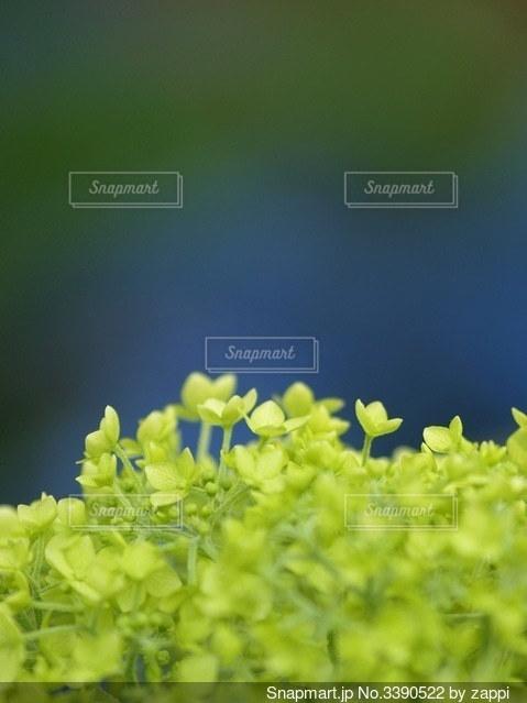 夏が来た、わーいわーい♪の写真・画像素材[3390522]