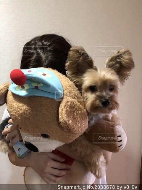 犬の写真・画像素材[2038678]