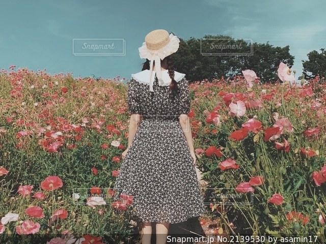 日曜日のひなげし畑の写真・画像素材[2139530]