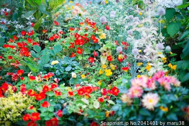 カラフルな花壇の写真・画像素材[2041401]
