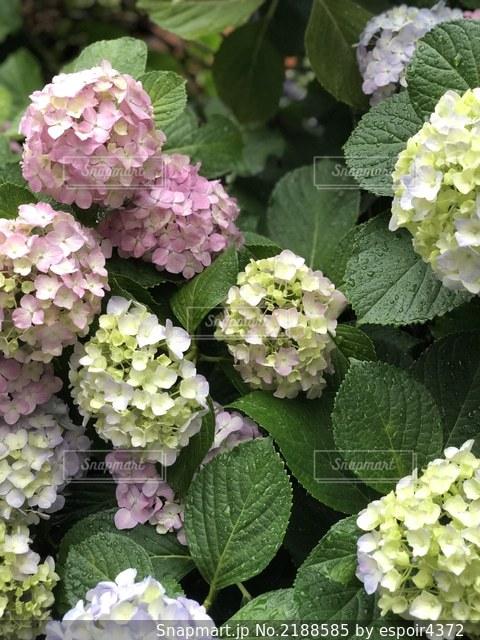 花のクローズアップの写真・画像素材[2188585]