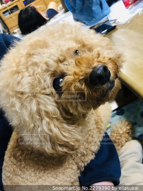 帽子をかぶった犬の写真・画像素材[2279390]