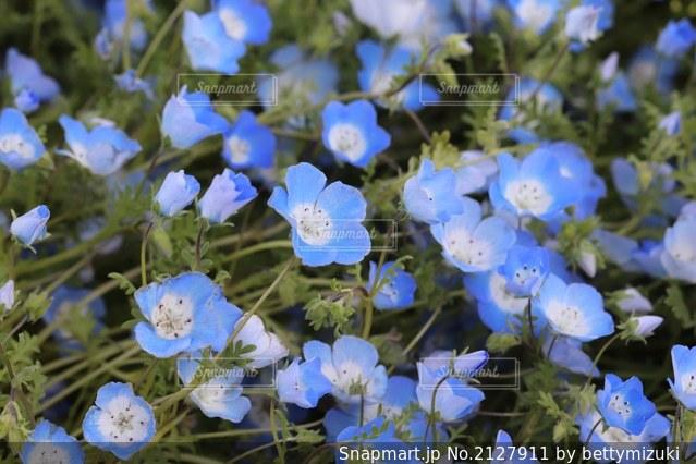 花のクローズアップの写真・画像素材[2127911]