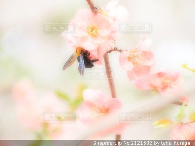 花と蜂の写真・画像素材[2121682]