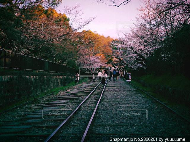 木々が背景にした列車の線路上の大きな長い列車の写真・画像素材[2826261]