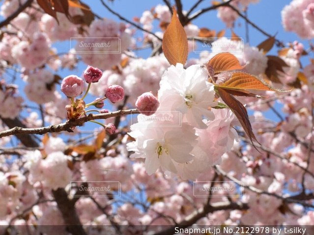 花のクローズアップの写真・画像素材[2122978]