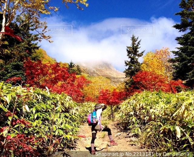 紅葉シーズンの山をハイキングの写真・画像素材[2213141]