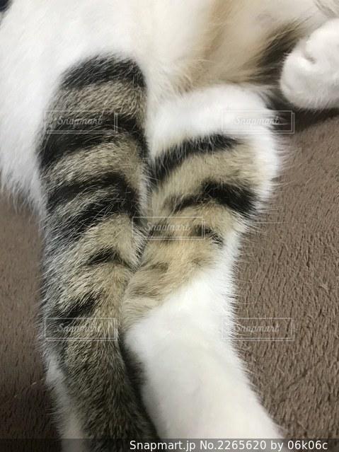 猫のクローズアップの写真・画像素材[2265620]