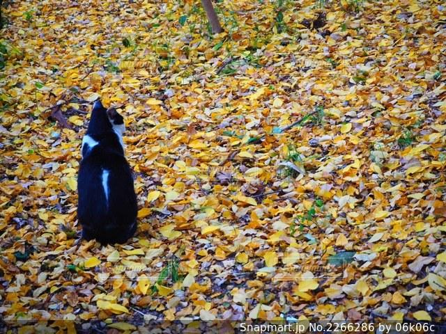 草に覆われた野原の上に座っている鳥の写真・画像素材[2266286]