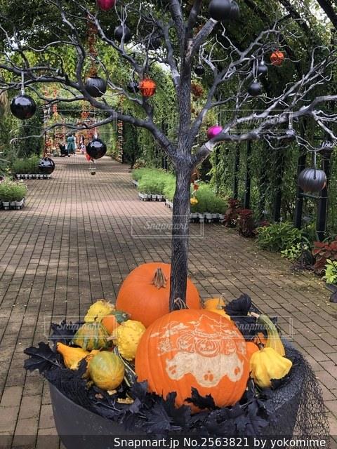 木の根元の大きなかぼちゃと小さな変わったかぼちゃでした。の写真・画像素材[2563821]