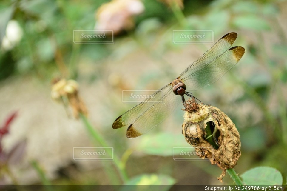 自然の写真・画像素材[249786]