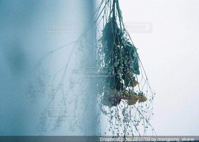 カーテン越しのドライフラワーと曇り空の写真・画像素材[2810769]