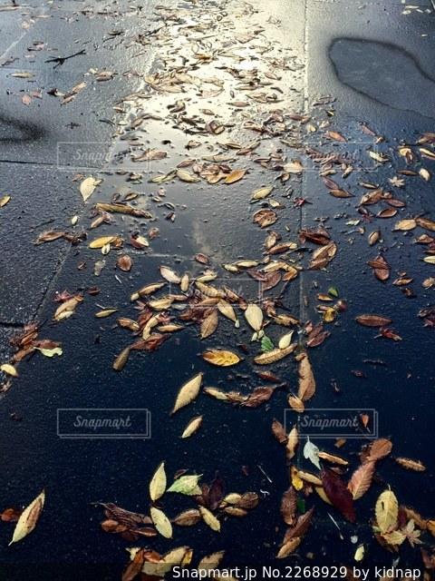 雨の休日の写真・画像素材[2268929]