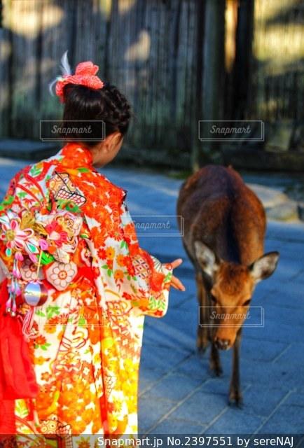 着物を着た女の子と鹿の写真・画像素材[2397551]