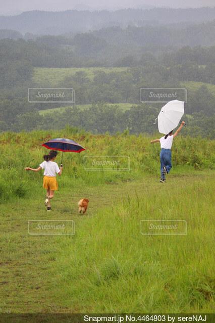 雨の日のかけっこの写真・画像素材[4464803]